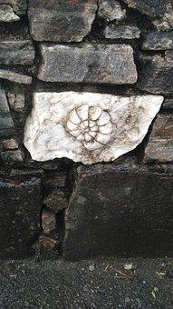 Fossil, Rock, Sassi, Plaster, Rocks, Stones, Wall