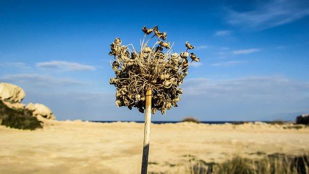 Dry Grass, Harvest, Cyprus, Soil, Summer, Thirst