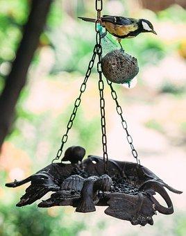 Bird, Feeding, Tit, Great Tit, Feed, Small, Nature
