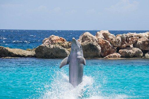 Dolphin, Aquarium, Jumping, Fish, Animal, Ocean, Water