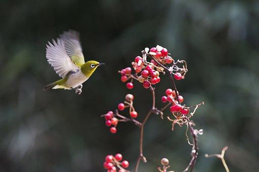 New, Dongbaksae, Fruit, Nature, Animal, Sparrow