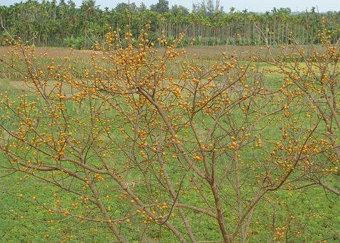 Berries, Wild, Fruit, Ripe, Bird Feed, Banavasi
