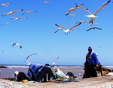 Fishing, Morocco, Essaouira, Blue, Harbor, Traditional