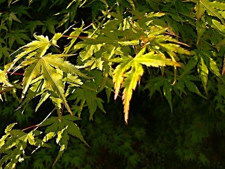 Foliage, Green, Branch, Plant, Plants, Sheet