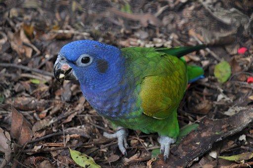 Parrot, Blue, Brazil, Tropical, Bird, Colorful, Nature
