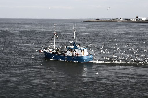 Ship, Sea, North Sea, Texel, Fishing Boat, Seagull