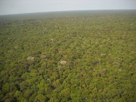 Brazil, Amazon, Equatorial Forest, Green, Flora