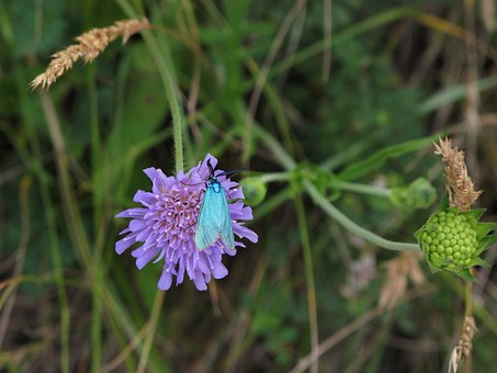 Butterfly, Blue, Turquoise, Forage, Flower