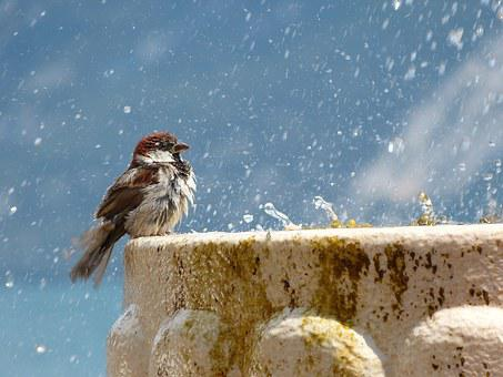 Bird, Drop Of Water, Fountain, Water, Feather, Wet