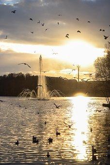 Sun, Birds, Bird, Sunset, Lake, Fountain, Water, Nature