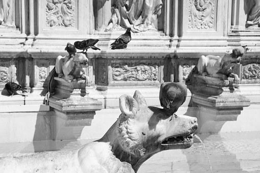 Fountain, Siena, Italy, Birds, Pigeons, Monument