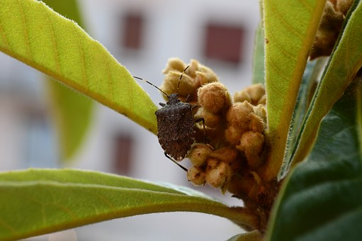 Bug, Insect, Insects, Bedbugs, Macro, Nature, Green