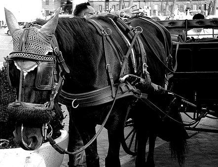 Horses, Black And White, Reflection, Cooperation, Sled