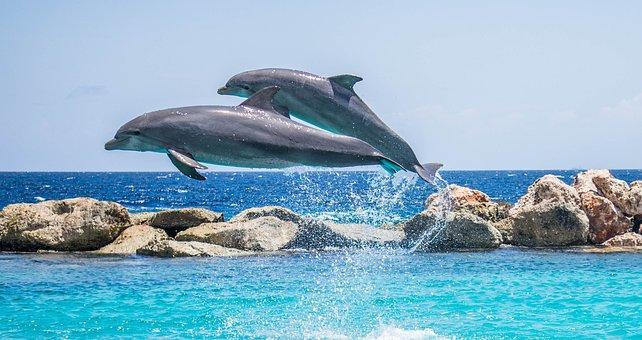 Dolphins, Aquarium, Jumping, Fish, Animal, Ocean, Water
