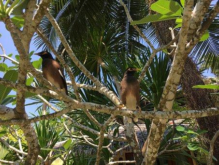 Asia, Thailand, Koh Chang, Tree, Birds, Animals