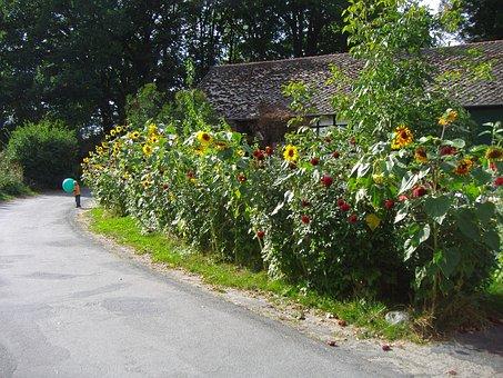 Cottage Garden, Gigantic, Little Kid