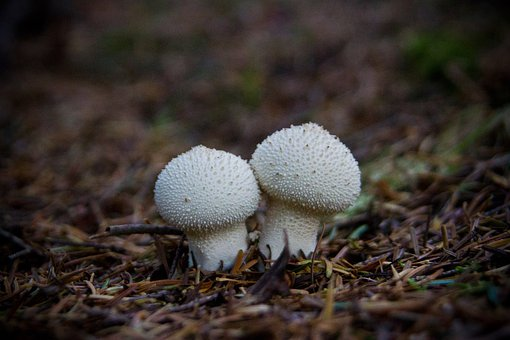 Mushroom, Couple, Two, Alone, Woodland, Nature, Relax