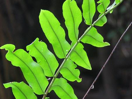 Twig, Leaves, Plant, Green, Lush, Bright, Color