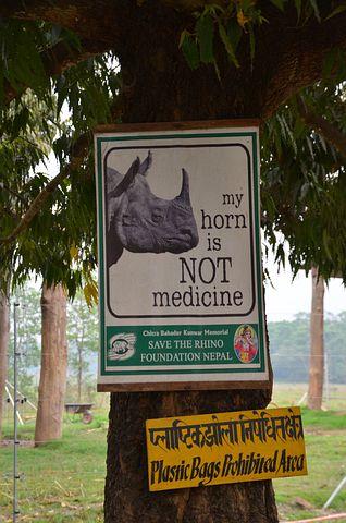 Nepal, Chitwan, Nature, Rhino, Poachers, Conservation