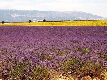 Lavender, Drôme, Provence, Landscape, Nature, Panorama