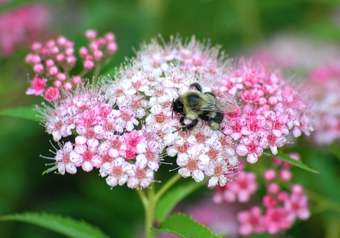 Bee, Flower, Nature, Insects, Spring, Macro
