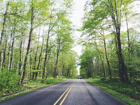 Rural, Road, Highway, Trees, Forest, Woods, Nature