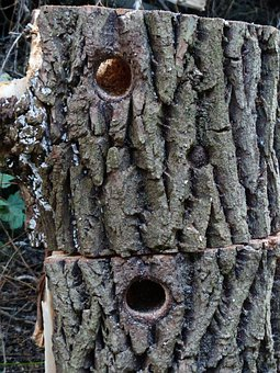 Hole, Woodpecker Hole, Woodpecker Cave, Bird's Nest