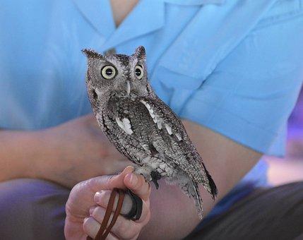 Owl, Bird, Animal, Little, Cute, Nature, Wildlife