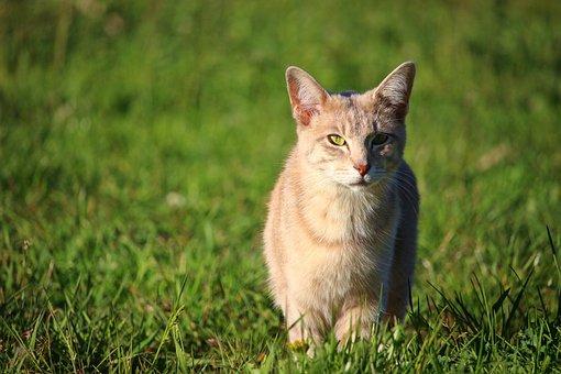 Cat, Kitten, Breed Cat, Mackerel, Young Cat