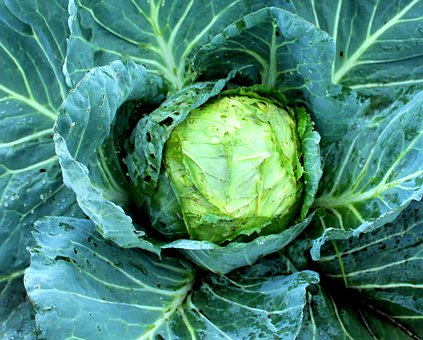Cauliflower, Green, Fresh, Vegetable, Bunga Kol