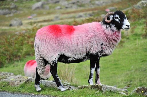 Sheep, Hills, Lake, Nature, Farm, Grass, Field, Green