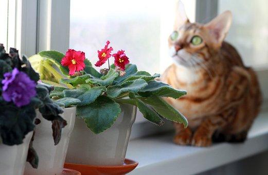 Cat, Bengali, Pet, On The Windowsill, Breed, Window