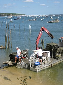 Oysters, Oyster, Artisan, Seafood, Arcachon Basin