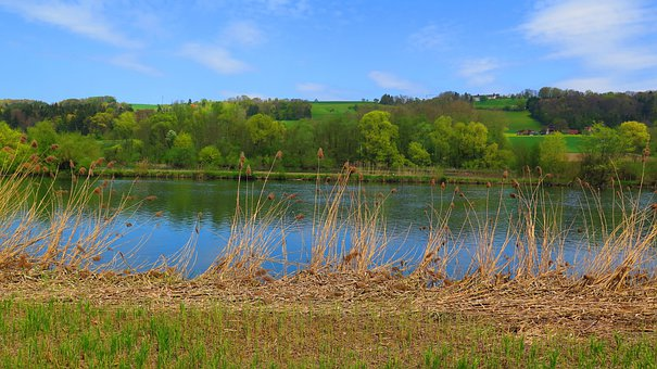 River, Trees, Bank, Reed, Nature, Landscape, Blue Green