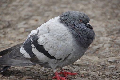 Parrow, Cold, Big, Bird, Nature, Season, Animal