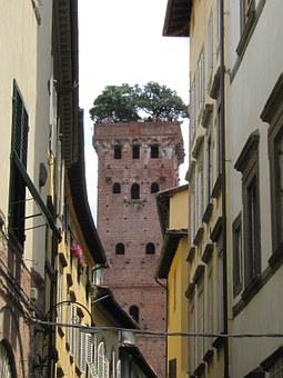 Lucca, Tower, Overgrown, Stone Oak