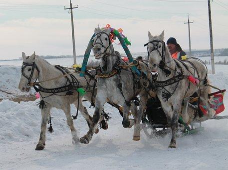 Threesome, Horse, Sani, Winter, Russia