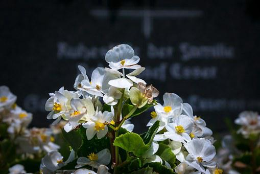 Ice Begonia, Grave, Cemetery, Tombstone, Grave Planting