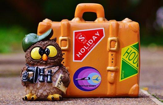 Owl, Tourist, Map, Binoculars, Camera, Travel, Holiday