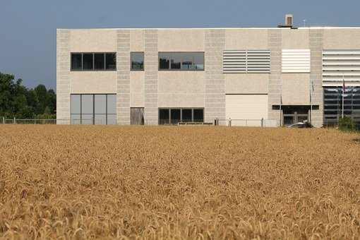 Factory And Campaign, Agriculture And Industry, Wheat