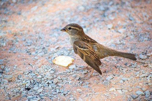 Bird, Desert, Animal, Wildlife, Desert Birds, Outdoors