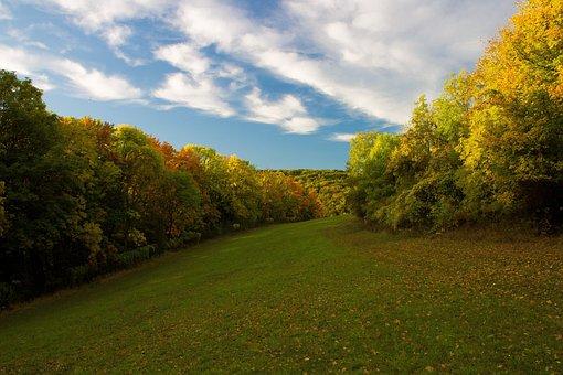Autumn, Deciduous Trees, Deciduous Forest, Fall Color