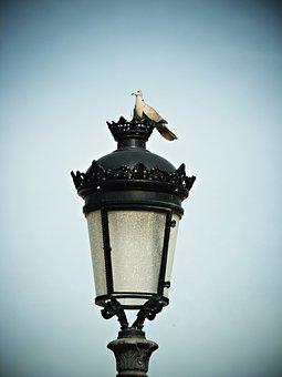Turtledove, Street Lamp, Sky, Bird, Rest, Pigeons
