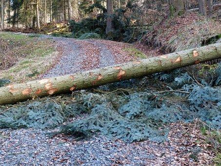 Forest Work, Wood Casework, Road, Blockade, Blocked