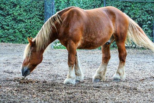 Horse, Animals, Horses, Nature, Ride, Ross