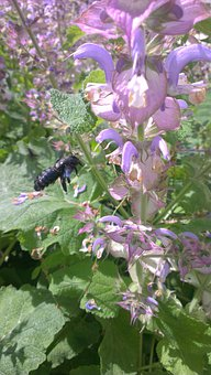 Bee, Carpenter Bee, Insect, Flower, Blossom, Bloom