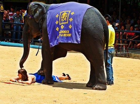 Pattaya, Elephant Show, Thailand, Show, Animal, Zoology