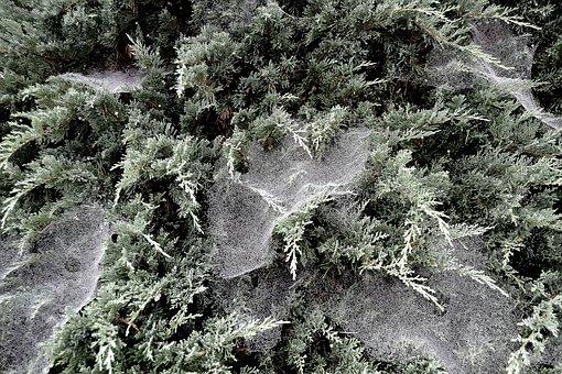 Spider, Webs, In The Dew