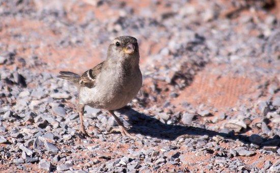 Bird, Desert, Southwest, Wild, Animal, Wildlife