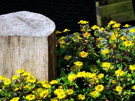 Flowers, Holzpflog, Pflog, Log, Wooden Block, Wood
